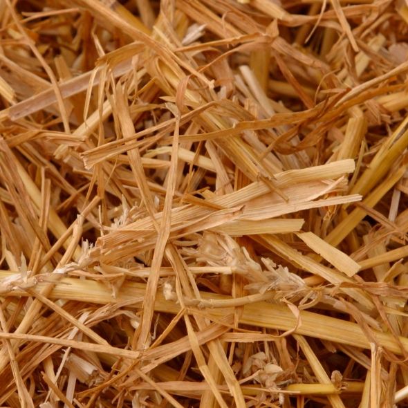 photograph of straw