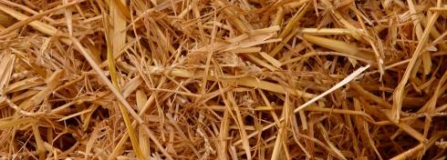 Straw-crop