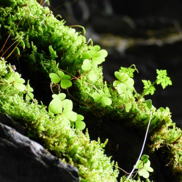 Moss and plants growing in a cave